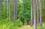 Cedar Glades Park, Arkansas