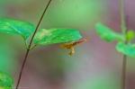 Odd Insect Cedar Glades Park, Arkansas