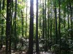 Cedar Glades Park Blue Trail