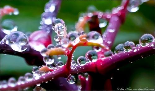 01172011 Colorful Raindrops Bokeh