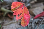 HSNP Upper Dogwood Trail Colorful Leaves
