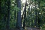 HSNP Dead Chief Trail