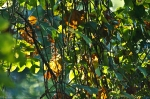 HSNP Short Cut Trail Leaves