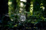 HSNP Upper Dogwood Trail Spiderweb Orb