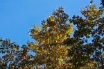 HSNP Goat Rock Trail Autumn Leaves