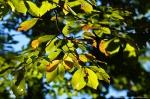 HSNP Gulpha Gorge Trail Autumn Leaves