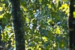 HSNP Upper Dogwood Trail Red Bellied Woodpecker