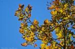 HSNP Upper Dogwood Trail Autumn leaves