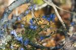 HSNP Goat Rock Trail Blue Sage