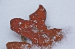 HSNP Peak Trail Snow Autumn Leaf