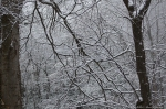 HSNP Tufa Terrace Snowy Branches