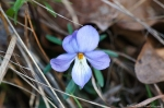 HSNP Goat Rock Trail Bird Foot Violet