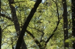 HSNP Upper Dogwood Trail Spring Leaves