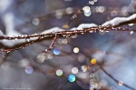 Nature Photography Lines Ice and snow bokeh