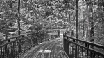 Winding Canopy Bridge B&W