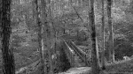 Wooden Ravine Bridge  B&W