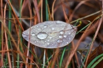 Nature Photography Lines and Light Raindrops