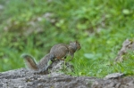 #Photo101 Energy and Motion - Squirrel