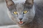 HSNP Eye Contact - Feral Cat