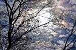 Dances with Light on the Trails - Sunrise Rainbow Mist