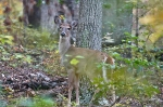 #Photo101 Energy and Motion - Young Whitetail Deer