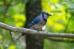 #Photo101 Energy and Motion - Blue Jay