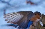 #Photo101 Energy and Motion - Bluebird