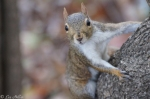 Dances with Light on the Trails - Juvenile Squirrel