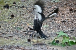 #Photo101 Energy and Motion - Juvenile Pileated Woodpecker