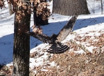#Photo101 Energy and Motion - Red Shouldered Hawk