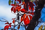 Dances with Light on the Trails - Virginia Creeper