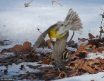 #Photo101 Energy and Motion - Pine Warbler