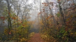 Dances with Light on the Trails - Forest Trails heavy Fog