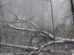 Dances with Light on the Trails - Forest Trails Blizzard
