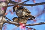 #Photo101 Energy and Motion - Mating House Sparrows