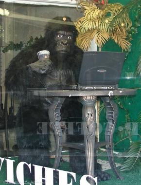 Photo101 Window Reflection Gorilla Glass
