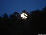 Dances with Light on the Trails - Moonlight