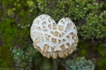 HSNP Upper Dogwood Trail Heart Shape Fungus