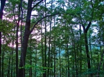HSNP Upper Dogwood Trail Canopy Sunset