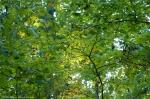 HSNP Upper Dogwood Trail  Autumn Confetti