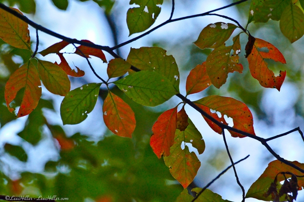 Autumn Leaves - A Change Of Focus