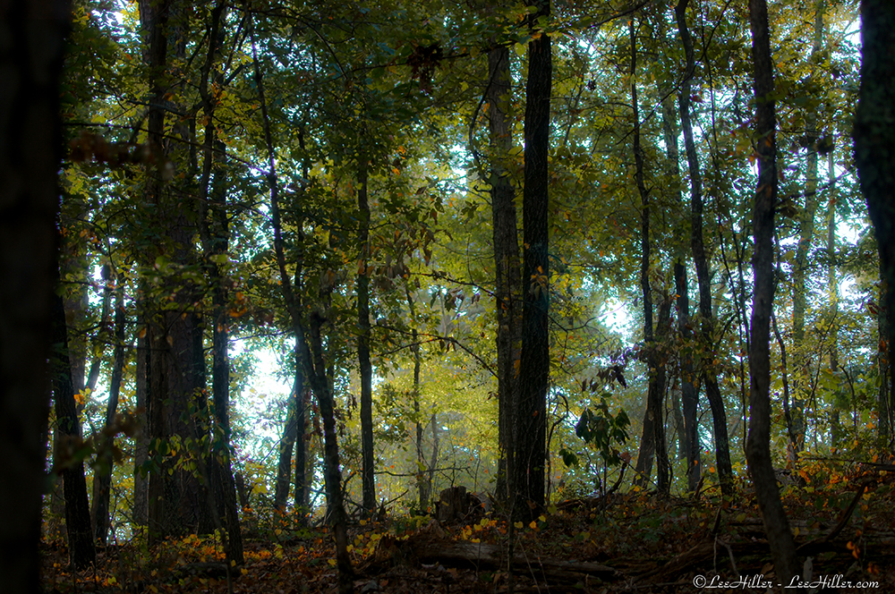 Each breath within the Forest fills my senses with…