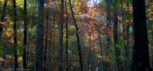 HSNP Upper Dogwood Trail Early Autumn Morning