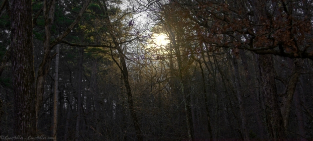 HSNP Golden Sunrise on the Trail