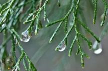 HSNP Spring Raindrops
