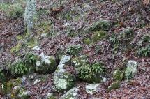 HSNP Spring Rain Ferns Moss Rocks