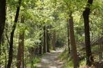 HSNP Hot Spring Mt Trail Spring
