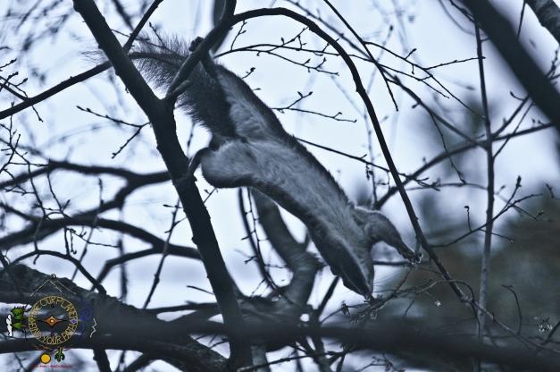 Breakfast Reach - Spring Baby Squirrel
