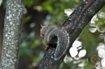 HSNP Squirrel