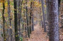 HSNP Upper Dogwood Trail Autumn
